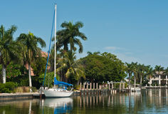 Sailing boat tied to a tropical dock. Single mast, sailing boat tied to a tropical dock on an island in the Gulf fo Mexico with homes ands palm trees Stock Image