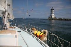 Sailing dog. Mixed breed dog on a sailboat near a lighthouse Royalty Free Stock Image