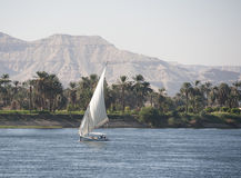 Sailing felluca on the river Nile. Traditional Egyptian sailing felluca travelling up the river Nile by Luxor Royalty Free Stock Photos
