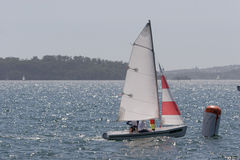 Sailing on the Harbour. A small sail boat racing on Sydney Harbour Royalty Free Stock Image