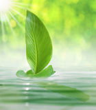 Sailing leaf in the bright day Royalty Free Stock Photo