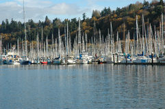 Sailing Marina Stock Images