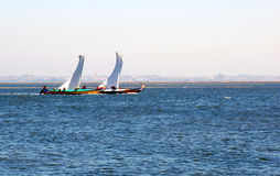 Sailing match of moliceiros Royalty Free Stock Photo