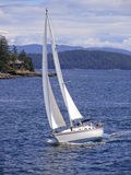Sailing the Puget Sound. Sailboat cruises through the Puget Sound in front of islands Royalty Free Stock Images