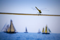 Sailing race spectator Stock Photography