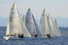 Sailboat Racing on Puget Sound, Seattle, Washington State. Sailing Races in the Pacific Northwest USA Royalty Free Stock Image