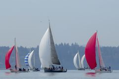 Sailboat Racing on Puget Sound, Seattle, Washington State. Sailing Races in the Pacific Northwest USA Royalty Free Stock Photography