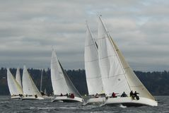 Sailboat Racing on Puget Sound, Seattle, Washington State. Sailing Races in the Pacific Northwest USA on Shilshole Bay, Seattle, WA Stock Photography