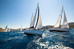 Sailing regatta Royalty Free Stock Photo