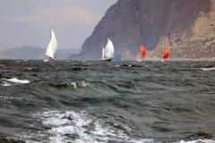 Sailing regatta along the coast Royalty Free Stock Photos