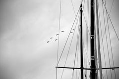 Sailing. On the sea with sea mew Royalty Free Stock Photos