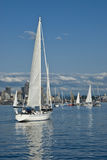 Sailing in Seattle Stock Image