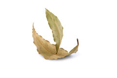 Sailing ship made from two laurel leaves on a white background. Sailing ship made from two laurel leaves, photographed on a white background Stock Photo