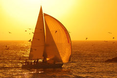 Sailing at Sunset. A sailboat flying a spinnaker as the sun sets in the background in southern California stock image