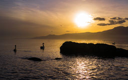 Sailing into Sunset. Swans sailing into beautiful Sunset over Adriatic Sea in Rijeka, Croatia, photographed at Winter day Stock Image