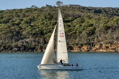 Sailing in Sydney Harbor royalty free stock photos