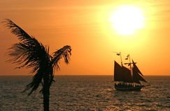 Sailing to the sunset. Palm tree Stock Photo