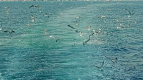 Sailing trail and seagulls. Boat leaving the trail sailing Bosporus and seagulls flaying stock video