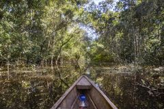 Leticia - region Amazonas - Colombia. Sailing in a wooden boat through the flooded forest in Leticia, Amazonas region, Colombia Stock Photo