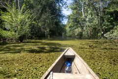 Leticia - region Amazonas - Colombia. Sailing in a wooden boat through the flooded forest in Leticia, Amazonas region, Colombia Royalty Free Stock Image