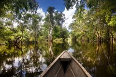 Leticia - region Amazonas - Colombia,. Sailing in a wooden boat through the flooded forest in Leticia, Amazonas region, Colombia Stock Images