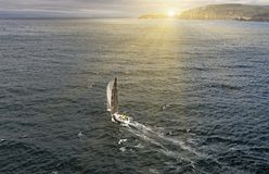 Sailing yacht race. Yachting. Sailing yacht in the sea royalty free stock photos