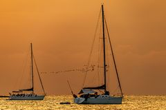Sailing yachts in the harbour and the flock stock images