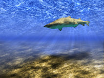 Sailling shark. Abstract background of the underwater world with a floating shark Royalty Free Stock Photos