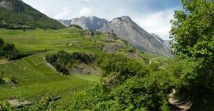 Saillon vineyards rhone valley wallis Royalty Free Stock Photos