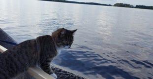 Sailor Cat Stock Photo
