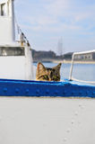 Sailor Cat. Cat Peeking Out Over The Board Of The Ship Stock Photos