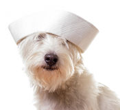 Sailor Dog Stock Photo