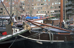 Sailor Dog. A furry gaurd dog watches over his master's houseboat in Rotterdam, the Netherlands royalty free stock photo