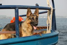 Sailor dog as ships mate Royalty Free Stock Photography