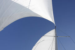 Sails catching wind Stock Image