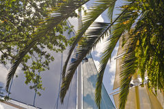 Sails and palms Royalty Free Stock Photo