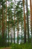 Saimaa lake, Finland Stock Photo