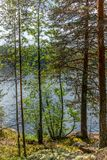 The Saimaa lake in the Kolovesi National Park in Finland seen t. Hrough the trees on its shores - 6 royalty free stock photo