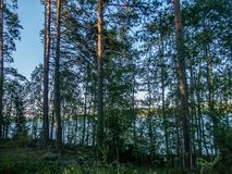 The Saimaa lake in the Kolovesi National Park in Finland seen t. Hrough the trees on its shores - 1 stock images