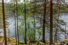 The Saimaa lake in the Kolovesi National Park in Finland seen t. Hrough the trees on its shores - 5 royalty free stock image