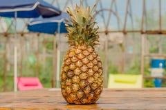 Sain d'ananas et frais tropicaux Photo libre de droits