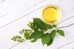 Sain et riche en huile de vitamines d'oiseau-cerise de baie sur un woode Photographie stock libre de droits
