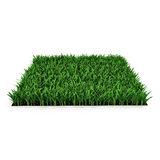 Saint Augustine Warm Season Grass sur le blanc illustration 3D illustration de vecteur