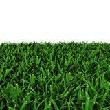 Saint Augustine Warm Season Grass on white. 3D illustration Stock Image