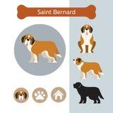 Saint Bernard Dog Breed Infographic illustration de vecteur