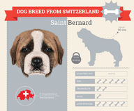 Saint Bernard dog breed  infographics Royalty Free Stock Photo