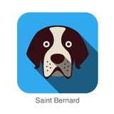 Saint Bernard dog face flat design Stock Photos