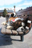 Saint Bernard Dog Family Stock Photo