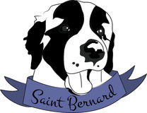 Saint Bernard Royalty Free Stock Photo