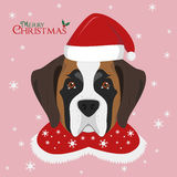 Saint Bernard dog with red Santa`s hat Royalty Free Stock Images
